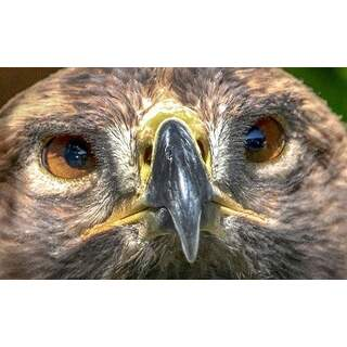 Hawk-03a