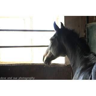 Kelly Horse
