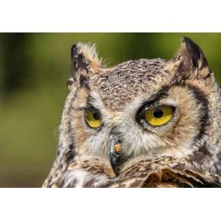 Owl-02a