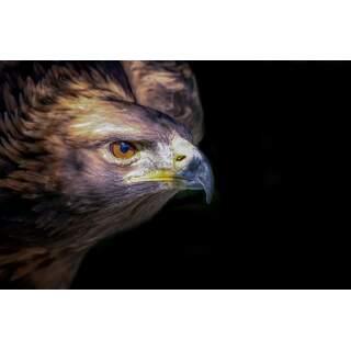 Hawk-02