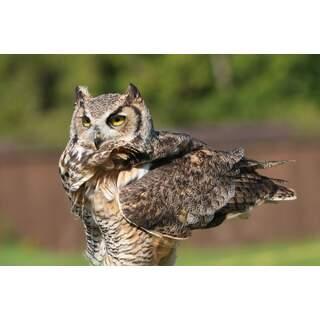 Owl-02